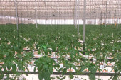 Tecnova desarrolla un nuevo sistema de control de clima para zonas cálidas