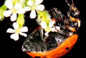 La UAL acoge en noviembre las XXXIII Jornadas de Entomología