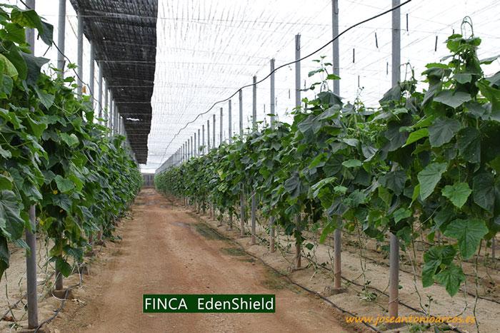 Finca-ecológico-tratado-con-EdenShield
