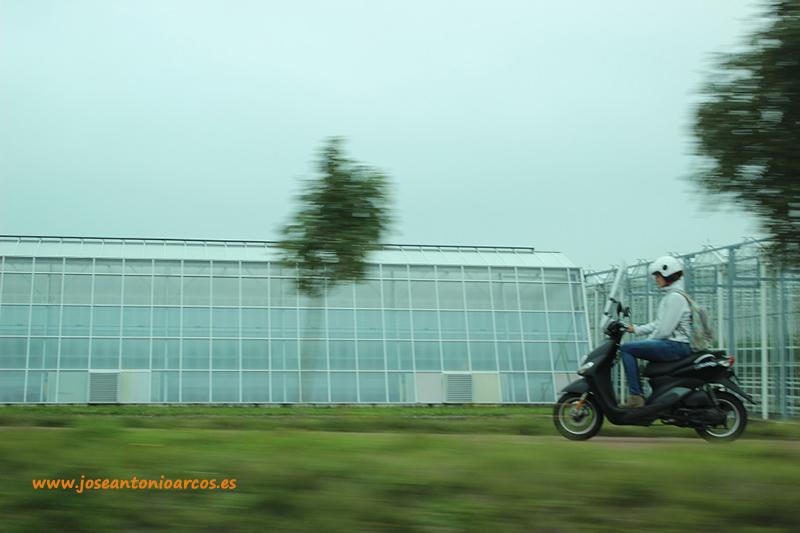 Invernaderos holandeses.