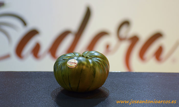 Tomate Adora. HM Clause. Sabor