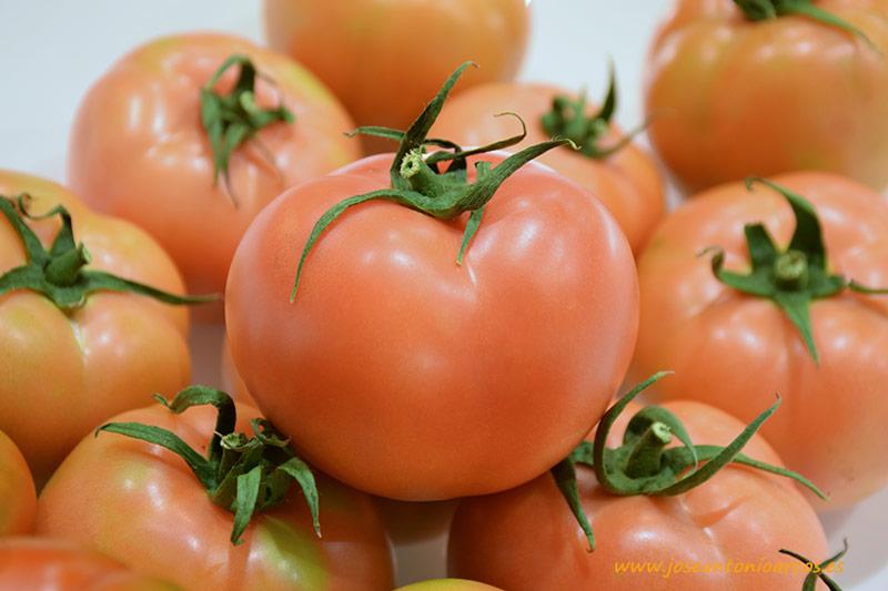 Tomate-rosa-Tinkwino-de-Nunhems