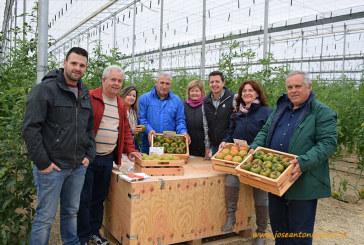 Rijk Zwaan despliega en Níjar su catálogo viviente de tomates