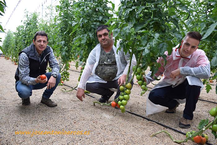 Manuel Hernández, Francisco José y su hijo José Francisco en una calle de tomate pera.