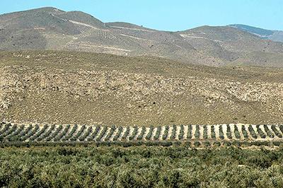 Detalle de la finca Castillo de Tabernas. Fuente: El mundo del olivar.
