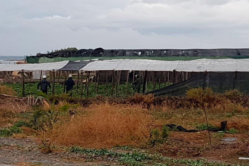 Las máquinas llegan a la costa de Albuñol para desesperación de los agricultores