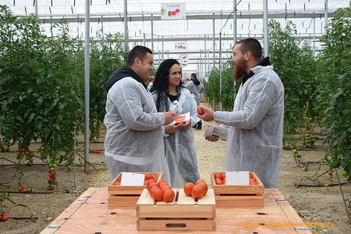 Jornada de tomate de Rijk Zwaan en Níjar.