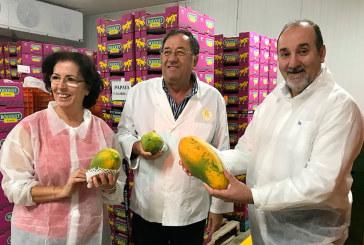 Hortamar confecciona y distribuye papaya almeriense