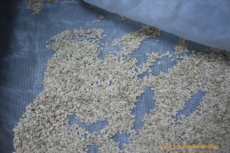 Semillas hortícolas.