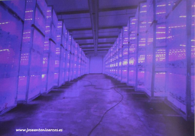 Asehor cuenta 9.050 hectáreas de pimiento