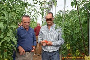 Tomate-Granoval-de-Meridiem-Seeds-3