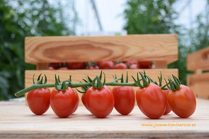 Tomate Sugarino.