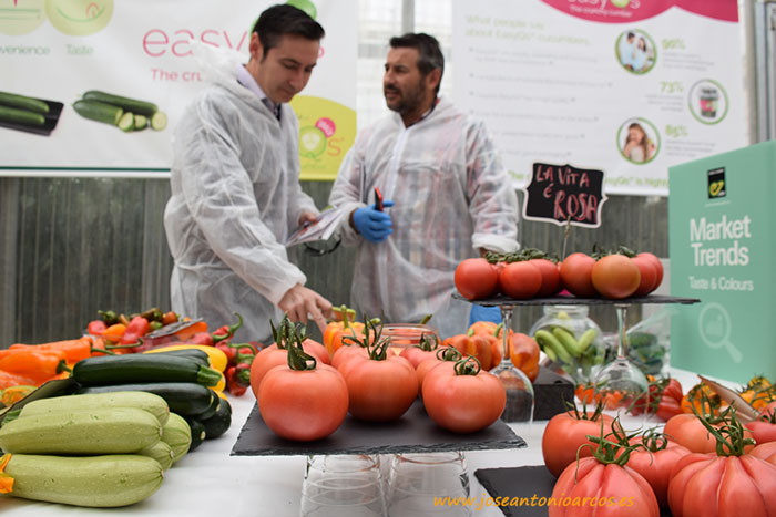 Tomate-rosa-Enza-Zaden2