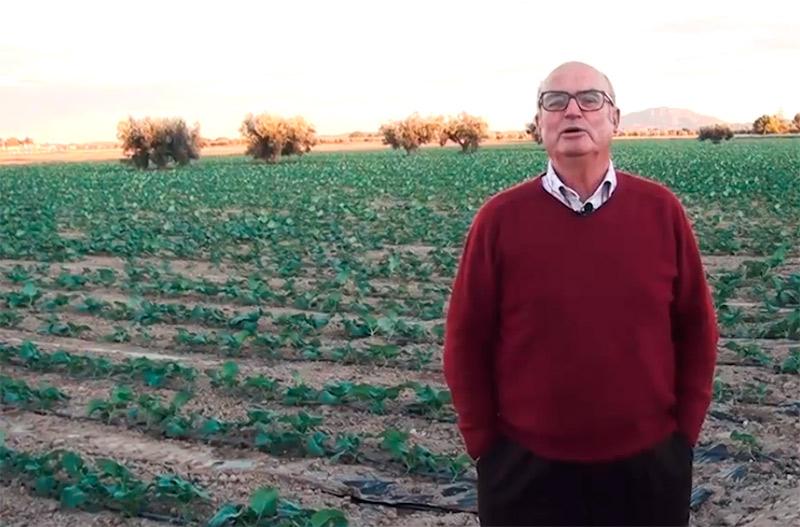 La huerta murciana se seca (vídeo)