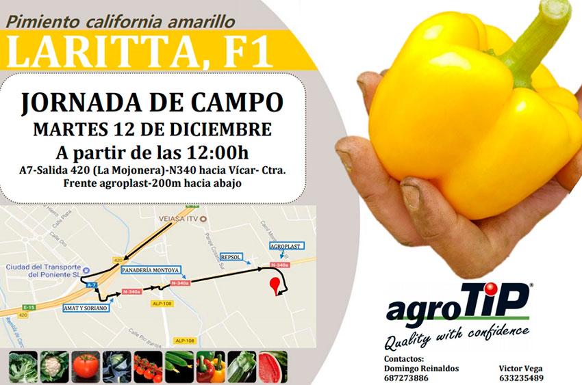 Día 12 de diciembre. Jornada de campo de pimiento california amarillo de agroTIP