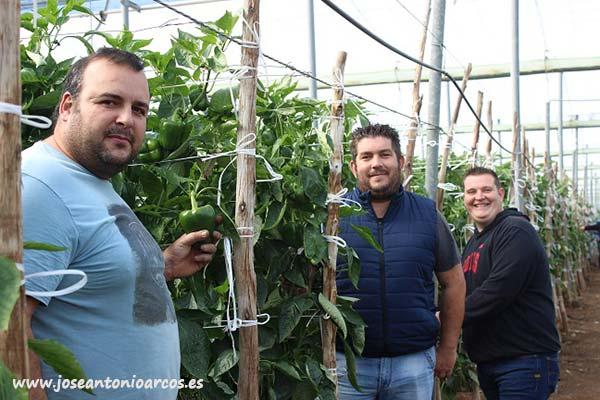 Los agricultores Rubén Molina, Javier Alcalá y Andrés Medina.