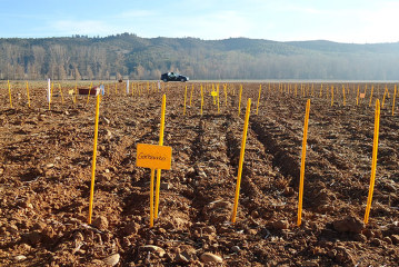 La Mancha recupera el cultivo tradicional de leguminosas