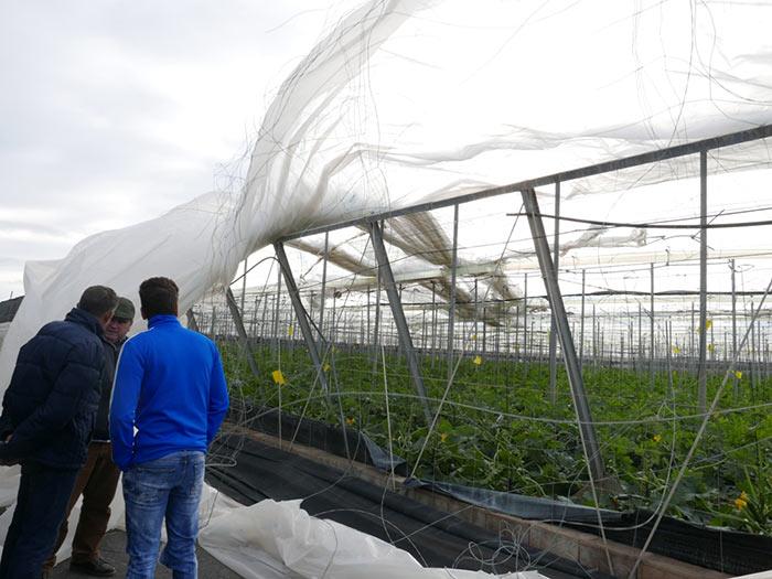 Importantes daños en cultivos en plena producción.
