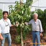 Bajo el primer invernadero de mango
