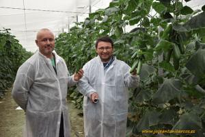 Pepino Mini. Los agricultores Bernardo Luque y José Antonio Rodríguez con Beautysun.