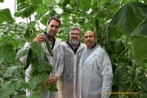 Pepino Midi (Jirra). Alberto Domingo (RZ) con los agricultores Juan José Rodríguez y Antonio López.