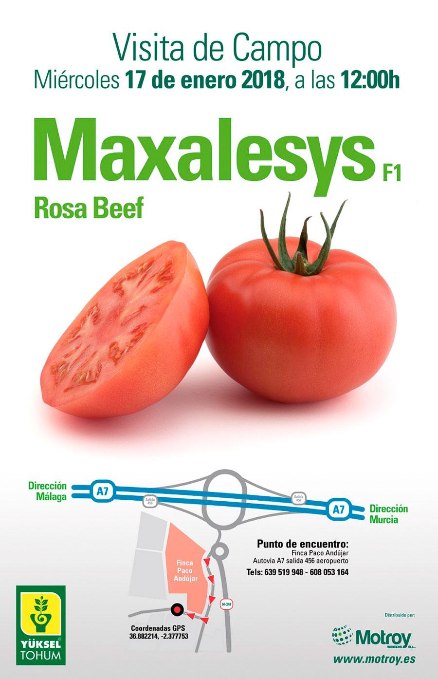 Tomate-rosa-beef-Maxalesys