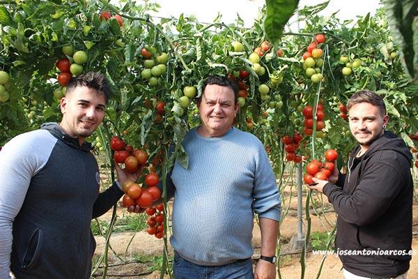 Nicolás y Alejandro Vargas con su padre Nicolás. Productores de tomate.