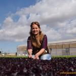 Las hojitas púrpuras que dan color a la ensalada