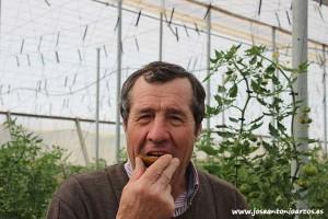 Tomates de sabor. Marmandes negros de Eugen Seed.