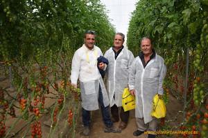 Familia Ferrer y Luque con tomate cherry Flavoriti