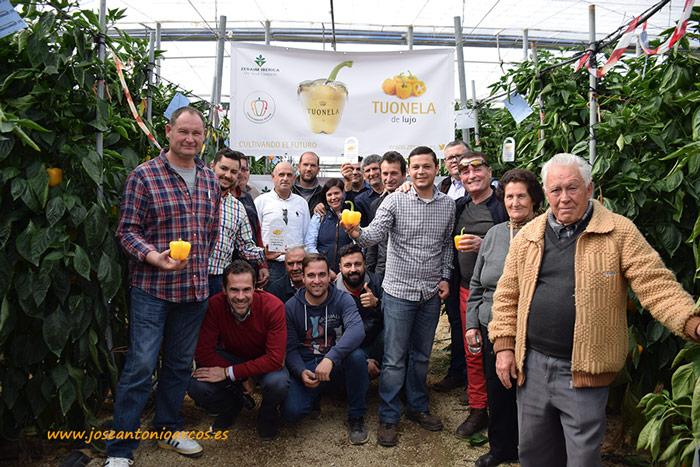 Pimiento california amarillo Tuonela. Zeraim. Agricultores de Almería.