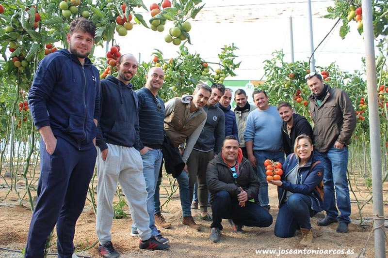 Jornada de tomate Sotomayor de Hazera en el campo de Níjar (Almería).