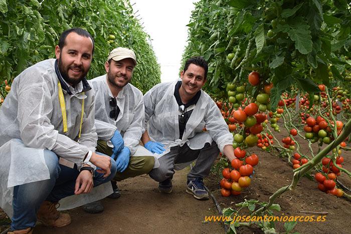 Manuel-Ruiz-Ayala,-Desarrollo-Hm-Clause,-Manolo-Gonzalez-y-Javier-Gonzalez-con-tomate-CLX-37993-de-HM-Clause