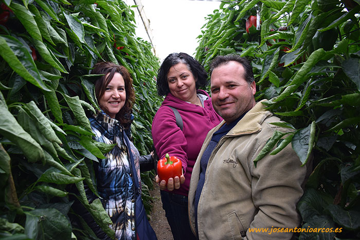 Núria Jiménez y Alfredo Cañadas agricultores de Carchuna y Encarna Alonso agricultora de Balerma con pimiento Kabuki