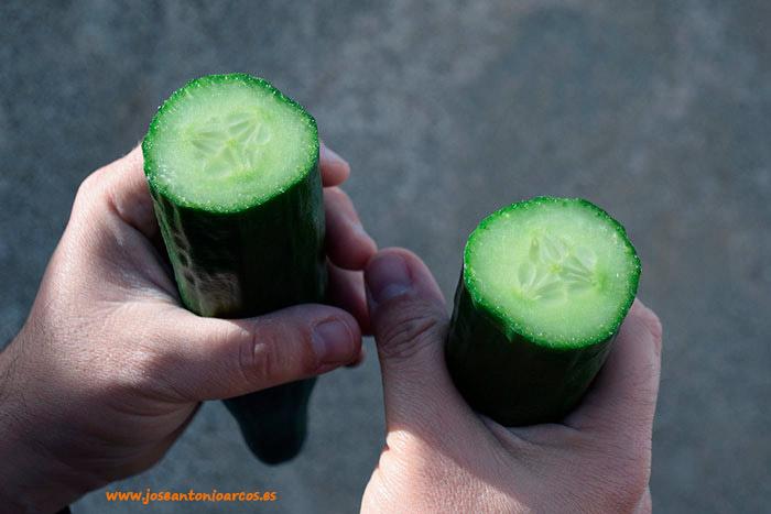 Pepino Sqisito de Nunhems de Bayer Vegetables Seeds.