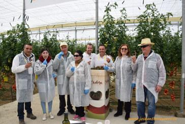 Media docena de nuevas variedades de tomate engordan el ramillete de Clause