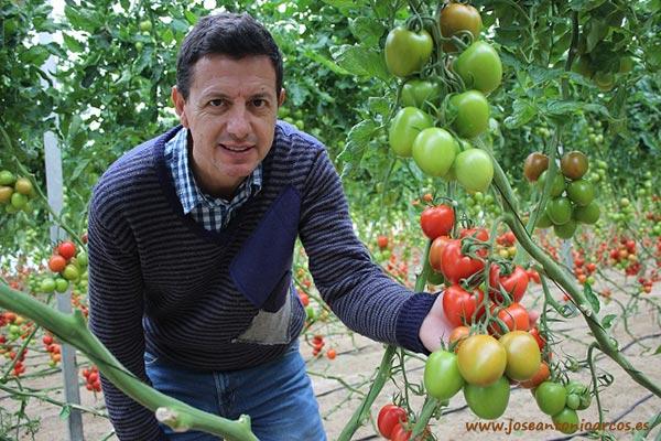 Tomate pera pera 74-163 RZ.