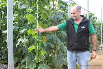 Un Grupo Operativo calculará el gasto de agua por cada kilo de hortalizas