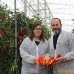 Enza Zaden lanzará el primer tricolor en dulce italiano