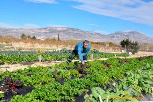 Agricultura en la calle. El Huertanico de Murcia.
