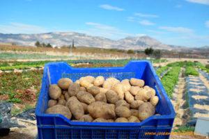 Patatas. El Huertanico.