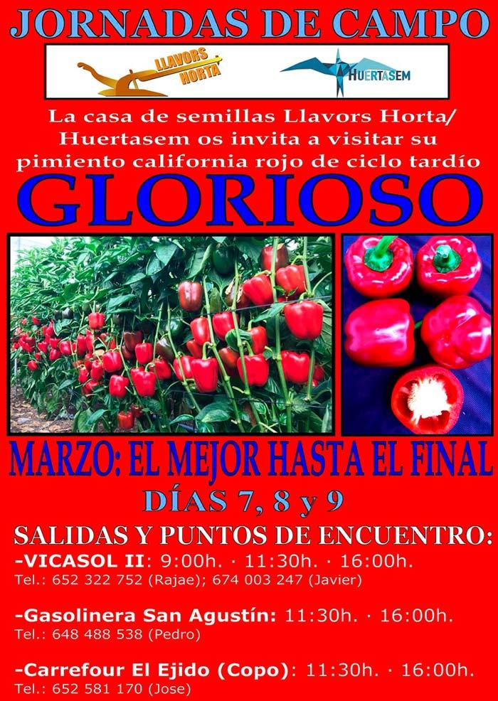 Días 7, 8 y 9 de marzo. Jornadas de campo de pimiento de LLavors Horta/Huertasem
