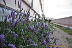 Setos en el exterior del invernadero. Reservorio de fauna auxiliar para la agricultura.