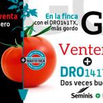 Día 15 de marzo. Día de campo de tomate de Seminis
