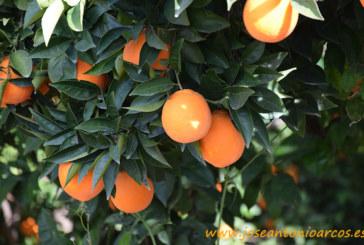 El Greening de los cítricos en las Jornadas de Feromonas