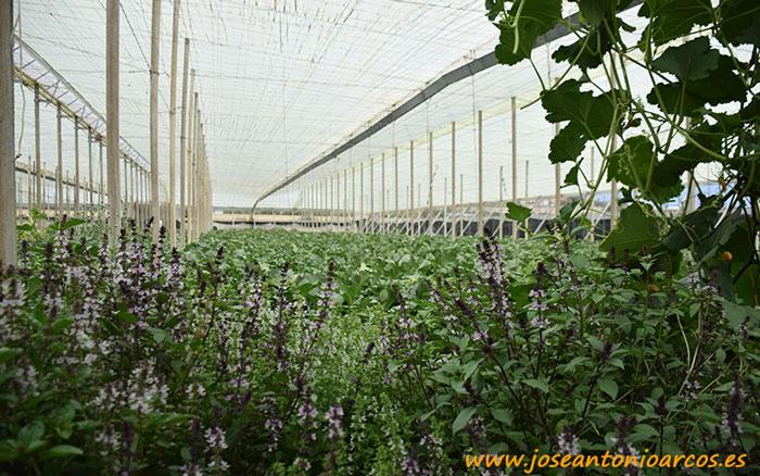 Agricultura ecológica. Murgiverde.