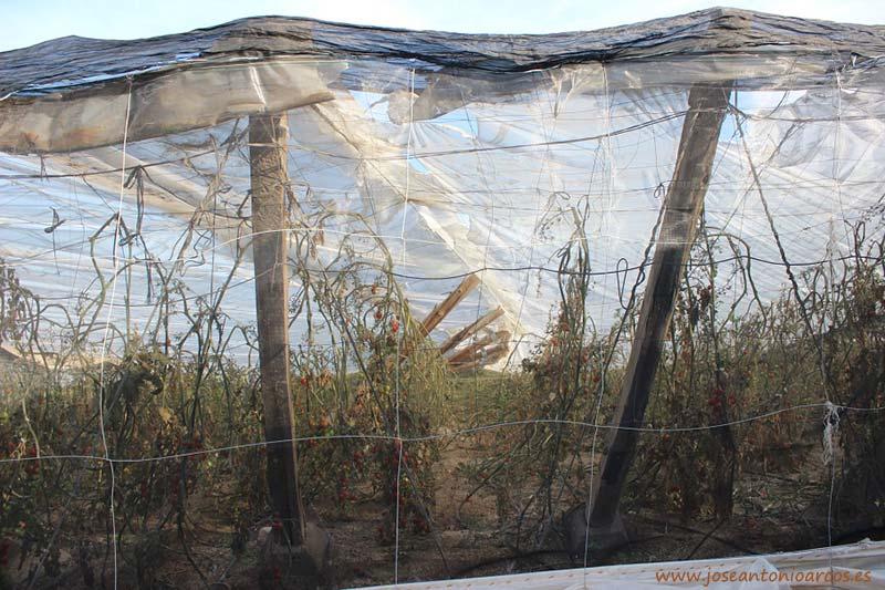 Invernadero de tomate destrozado por el granizo del 1 de mayo en Almería.