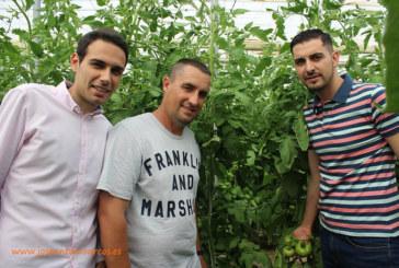 Almería alarga su ciclo. Lamuyo y tomate de primavera