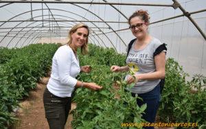 María Gómez y Ana Rubio en un invernadero de screening de tomate.