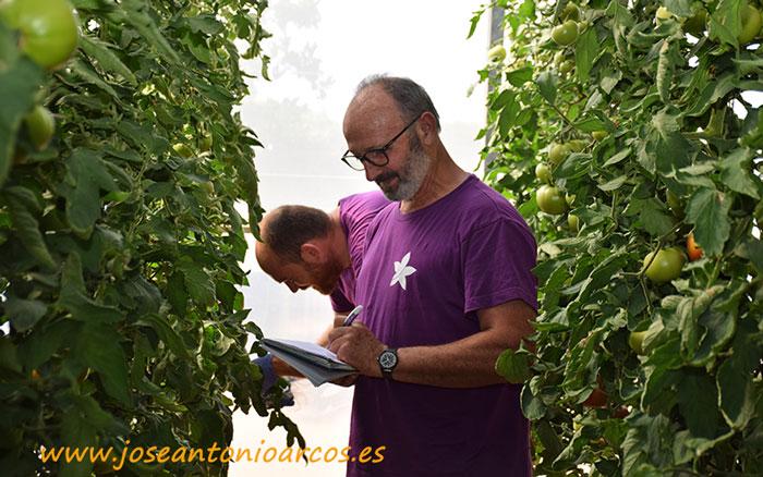 Campo de ensayos de Seipasa en La Alcudia, Valencia. Ensayos de Tuta en tomate.